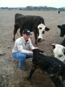 Texas Whitetail Deer Hunting - Baby calf