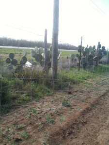 Whitetail Deer Hunts - Fence going up