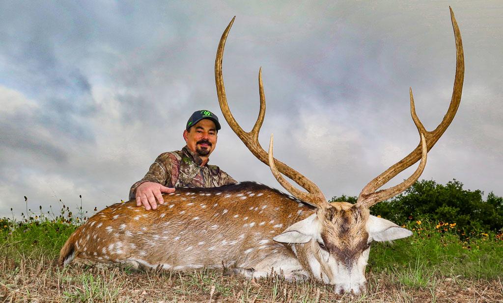 Hunter with beautiful Texas Axis Deer