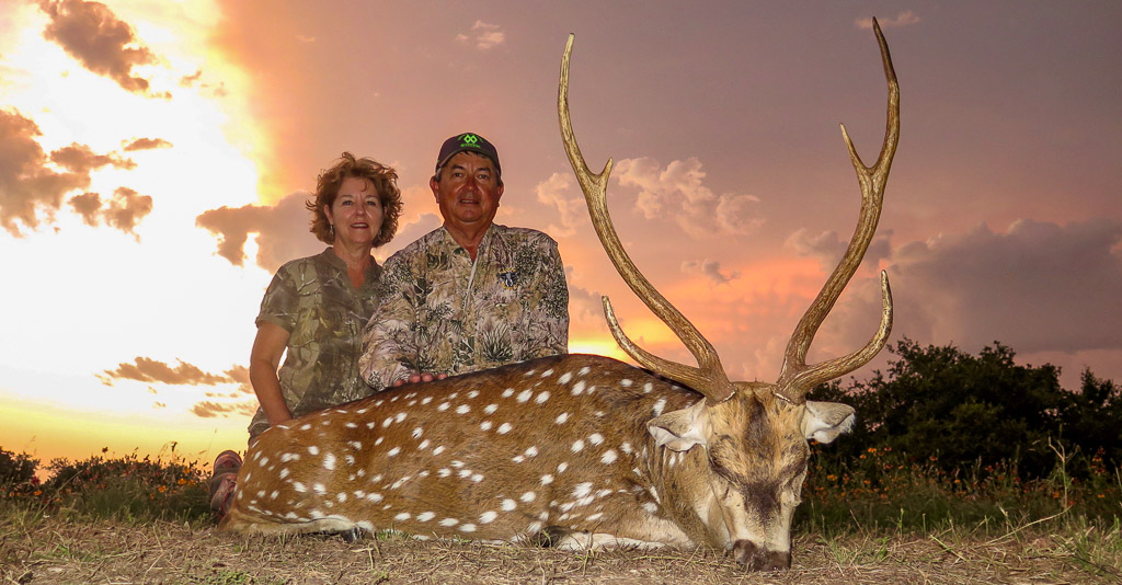 Husband and Wife Hunters posing with their Axis Deer with a beautiful orange sunset in the background