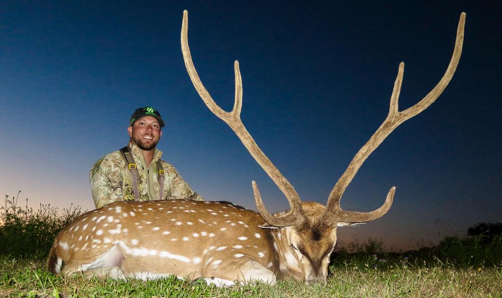 Hunter sitting behind large Axis deer at dusk