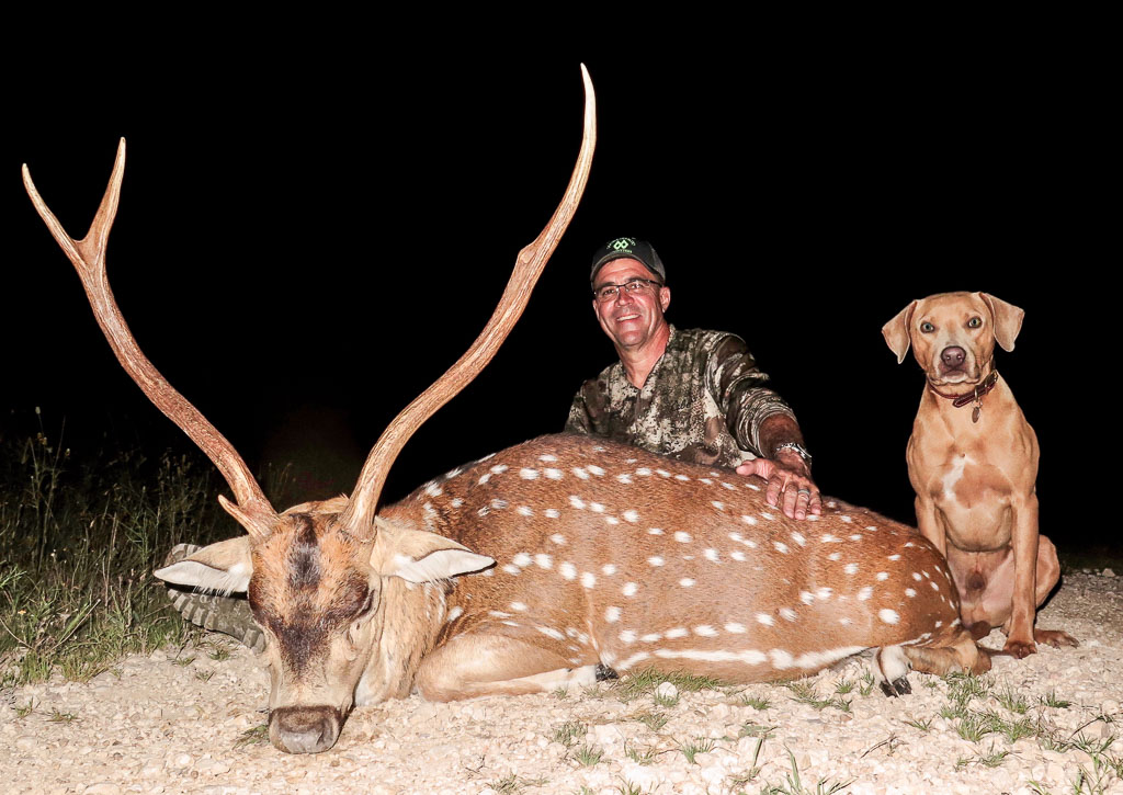 Hunter and deer tracking dog with large axis buck at night
