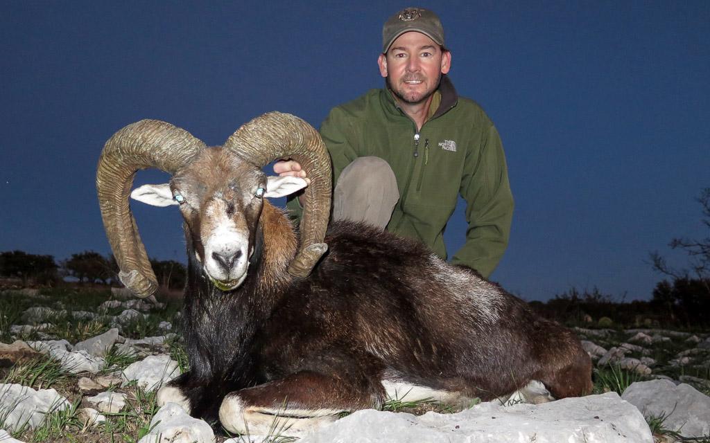 Hunter with large Mouflon Ram at nightfall