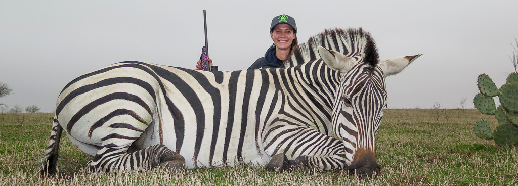 Female hunter with dead zebra - Successful Zebra hunting Texas