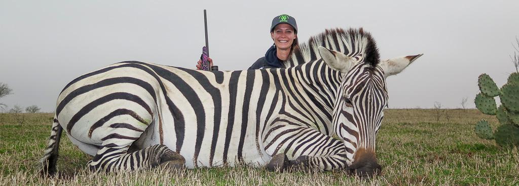 Female hunter with dead zebra - Successful Zebra hunting Texas